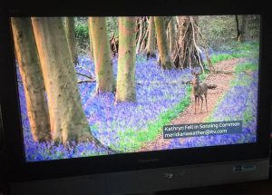 Bluebells photo of photo on TV
