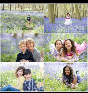 Bluebells_BLOGSTOMP